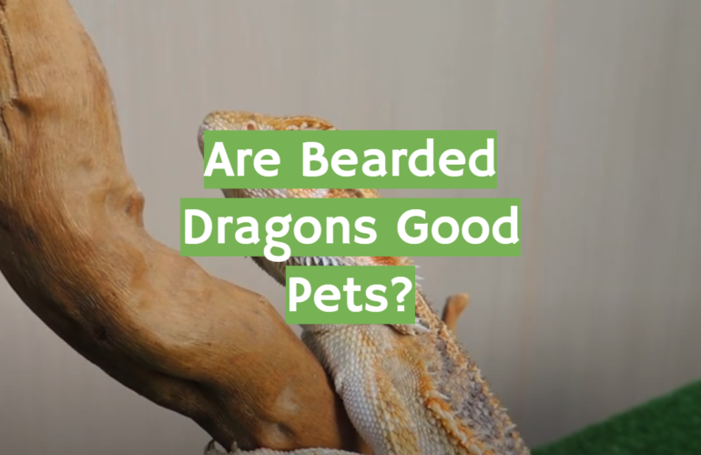 Are Bearded Dragons Good Pets?