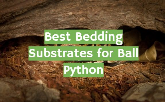 5 Best Bedding Substrates for Ball Python