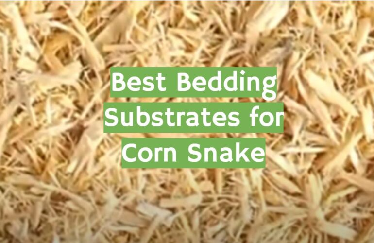 5 Best Bedding Substrates for Corn Snake