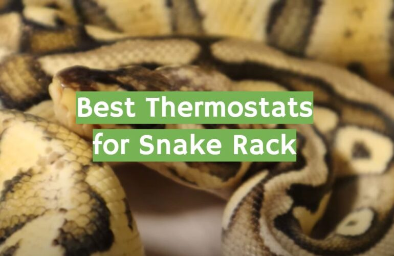 5 Best Thermostats for Snake Rack