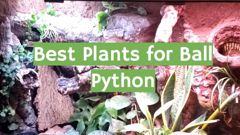 5 Best Plants for Ball Python