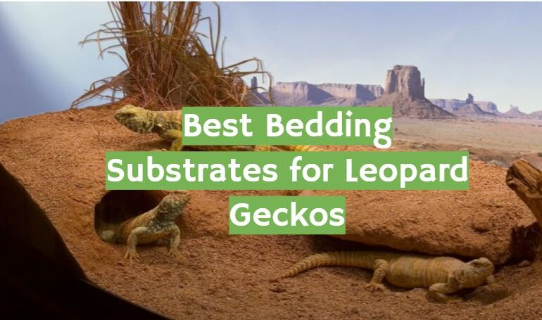 Best Bedding Substrates for Leopard Geckos