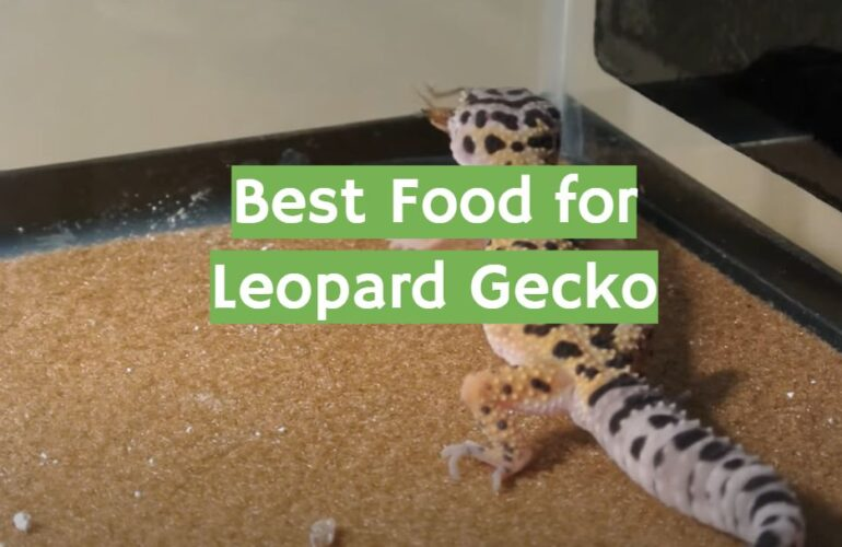 5 Best Food for Leopard Gecko