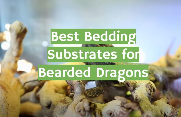 5 Best Bedding Substrates for Bearded Dragons