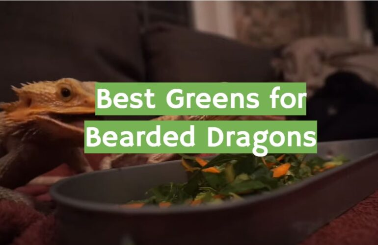 5 Best Greens for Bearded Dragons