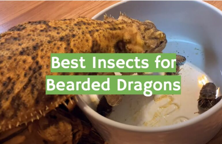 5 Best Insects for Bearded Dragons