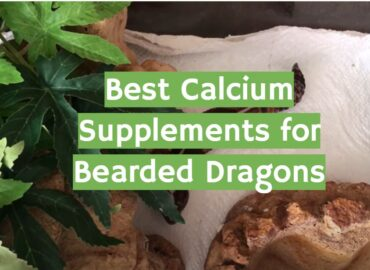 5 Best Calcium Supplements for Bearded Dragons