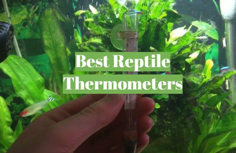 5 Best Reptile Thermometers