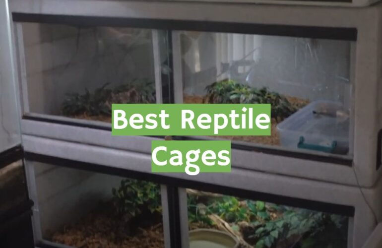 5 Best Reptile Cages