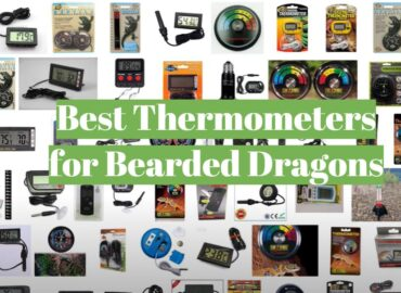 5 Best Thermometers for Bearded Dragons
