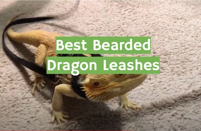 5 Best Bearded Dragon Leashes
