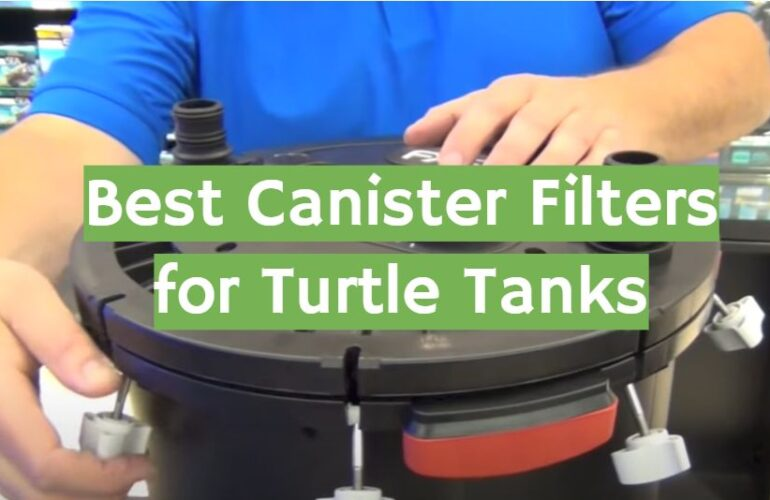 5 Best Canister Filters for Turtle Tanks