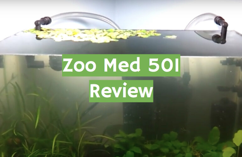 Zoo Med 501 Review